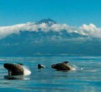 5 Wysp