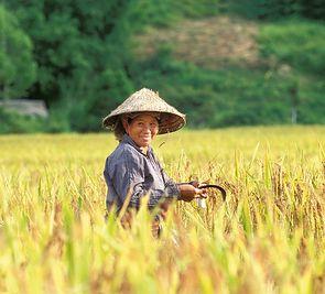 7+7: Good morning, Vietnam