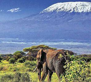 Kenijskie Trio