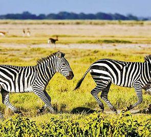 Kenia - powitanie z Afryką + wypoczynek w hotelu Voyager Beach