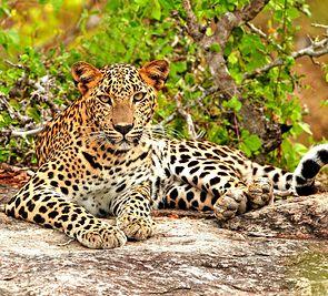 7+7: Sri Lanka - Łza z policzka Indii de luxe